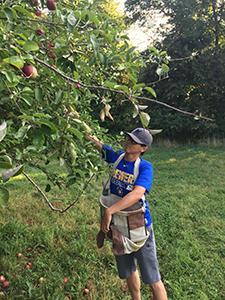WSPA member picking apples